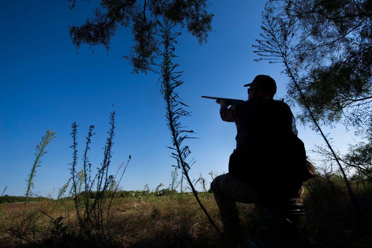 Texas Dove Hunting Season Starts With A Bang