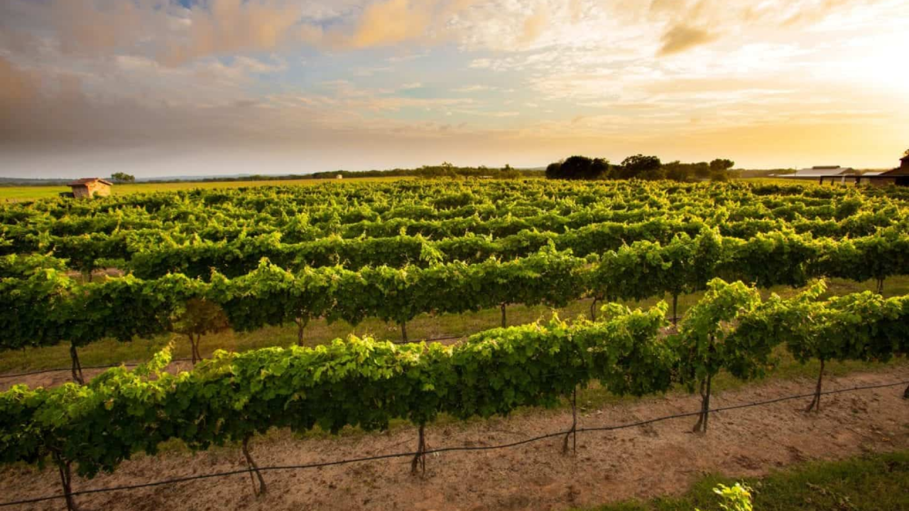 https://thetexan.news/wp-content/uploads/2020/08/Hill-Country-Winery-TABC-Alcohol-1280x720.png