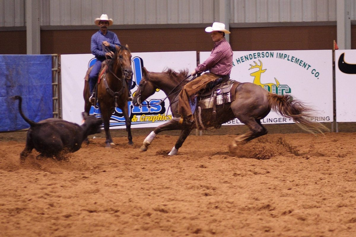 State-Funded Horse Shows Still On Despite Fort Worth Rodeo Cancellation